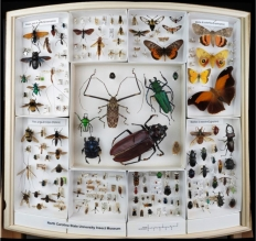 Bertone_insects