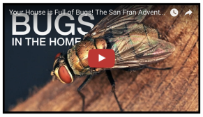 bugs in homes SF