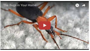 bugs in homes