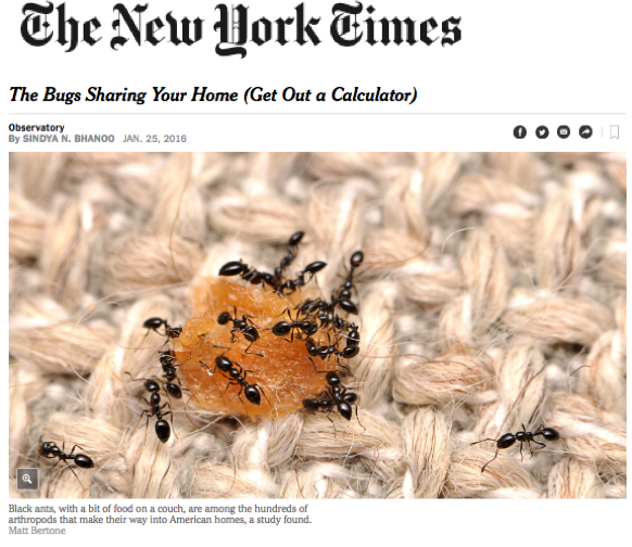 nytimes_bugsin houses